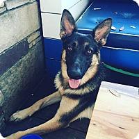 Adopt A Pet :: Sebastian - Austin, TX