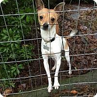 Adopt A Pet :: Kermit - Surrey, BC