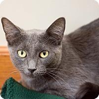 Adopt A Pet :: Princess - Fountain Hills, AZ