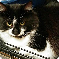 Adopt A Pet :: Fuzzball - Sunderland, ON
