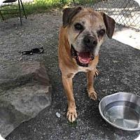 Adopt A Pet :: VINNY - Atlanta, GA