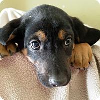 Adopt A Pet :: I'M ADOPTED Spc Boys