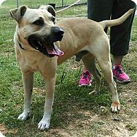 Adopt A Pet :: Newton - Union Springs, AL