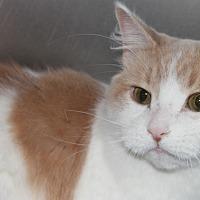 Adopt A Pet :: BRO - Clayton, NJ