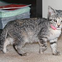 Adopt A Pet :: Rue - Attalla, AL
