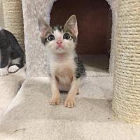 Adopt A Pet :: Dud - Mobile, AL