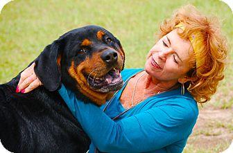 Rottweiler Mix Dog for adoption in Preston, Connecticut - Hank