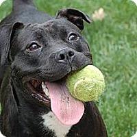 Adopt A Pet :: Sasha - WARREN, OH