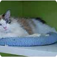 Adopt A Pet :: Arnie - Marietta, GA