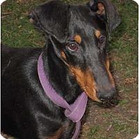 Adopt A Pet :: Brody - Sun Valley, CA