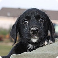 Adopt A Pet :: Aiden - PENDING - kennebunkport, ME