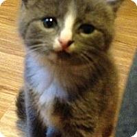 Adopt A Pet :: Basil - Monroe, GA