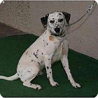 Adopt A Pet :: Faith Petunia - Newcastle, OK