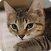 Adopt A Pet :: Maci - Sacramento, CA