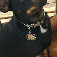 Dachshund Mix Dog for adoption in Sunset, Louisiana - Jack and Lokey