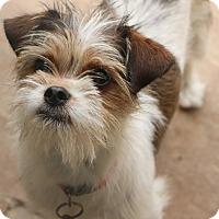 Adopt A Pet :: Suds - Norwalk, CT