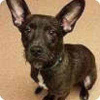 Adopt A Pet :: Professor Snape - Columbus, GA