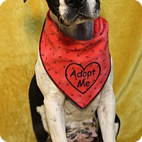 Adopt A Pet :: Pippy - Manchester, CT