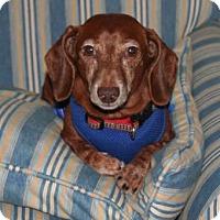 Adopt A Pet :: Bauer - Umatilla, FL