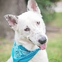 Adopt A Pet :: Boy - Kingwood, TX