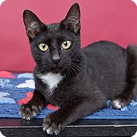 Adopt A Pet :: Swoosh - Wilmington, DE