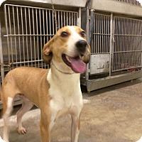 Adopt A Pet :: HAPPY - Upper Sandusky, OH