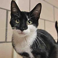 Adopt A Pet :: ROM - Fort Wayne, IN