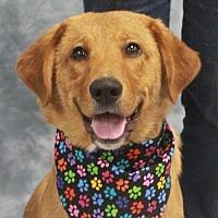 Adopt A Pet :: Porter - Garfield Heights, OH