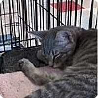 Adopt A Pet :: Squirrel - West Dundee, IL