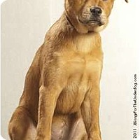 Adopt A Pet :: Clover - Holland, MI