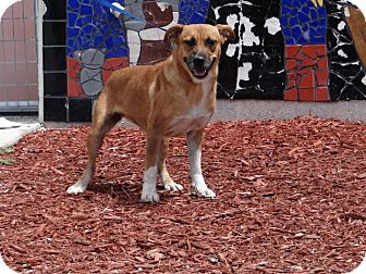 Terrier (Unknown Type, Medium) Mix Dog for adoption in Palmetto Bay, Florida - Olivia Benson