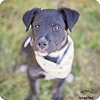 Adopt A Pet :: Lucy - Kingwood, TX