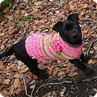 Adopt A Pet :: Tink - Adopted! - Croydon, NH