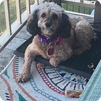 Adopt A Pet :: Maisey - Mount Gretna, PA