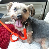 Adopt A Pet :: MYLES - Jacksonville, FL