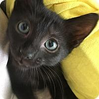 Adopt A Pet :: Manchego - Tampa, FL