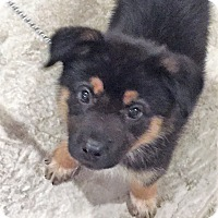 Adopt A Pet :: Fleetwood - Rochester, NY