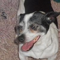 Adopt A Pet :: Rascal - Yucaipa, CA