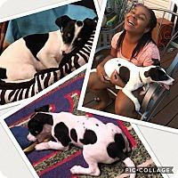 Adopt A Pet :: Kylo - Ringwood, NJ