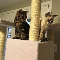 Adopt A Pet :: Brantley and Todd - Arlington, VA