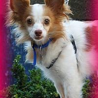Adopt A Pet :: Heidi - Anaheim Hills, CA