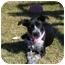 Photo 1 - Schnauzer (Standard)/Terrier (Unknown Type, Small) Mix Dog for adoption in Portsmouth, Rhode Island - Oreo