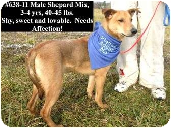 Shepherd (Unknown Type) Mix Dog for adoption in Zanesville, Ohio - # 638-11@ Animal Shelter