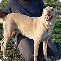 Adopt A Pet :: Luke-adoption in progress - Marshfield, MA