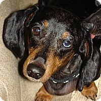 Adopt A Pet :: Milo - Killingworth, CT