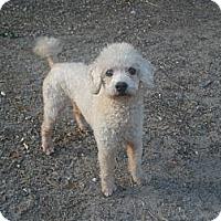 Adopt A Pet :: Jay - Cantonment, FL