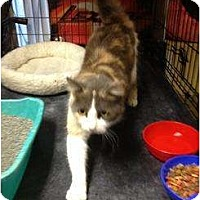 Adopt A Pet :: Janet - Mobile, AL