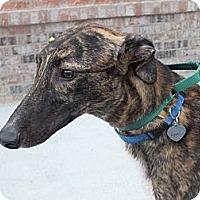 Adopt A Pet :: LB's Nailed Shut