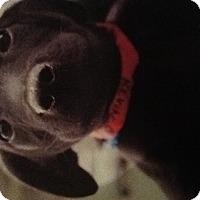 Adopt A Pet :: Kevin - New Boston, NH