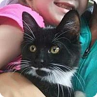 Adopt A Pet :: Cosmo - Raritan, NJ